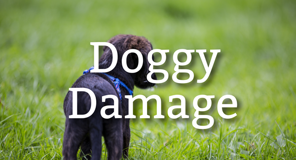 lawn damage from dogs