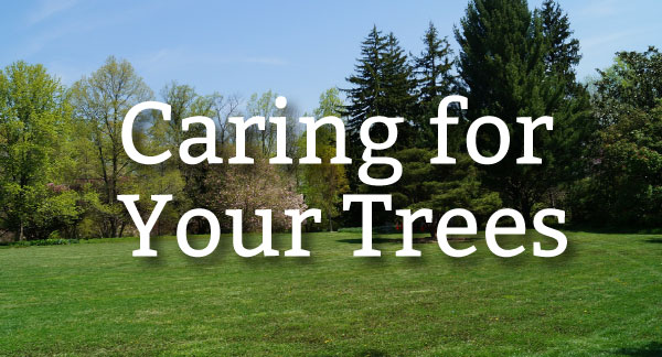 Pure-Green-Caring-for-Trees-01.jpg