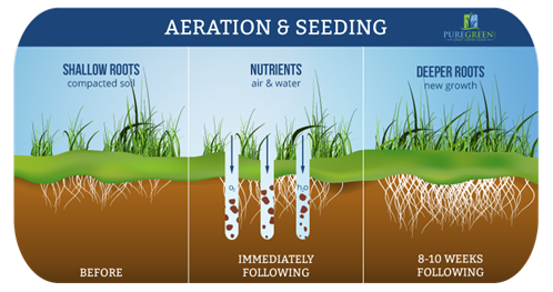 Pure Green Franklin Aeration Specialists