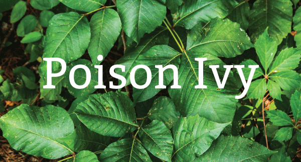 Pure-Green-poison-ivy