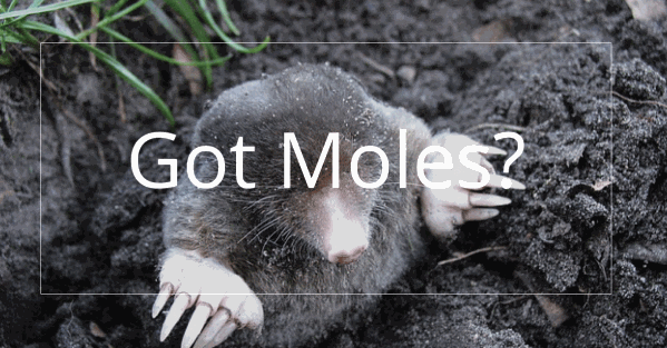 Pure-Green-Moles-linked.png