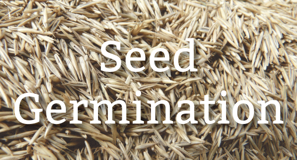Pure-Green-blog-header_seed-germination.png