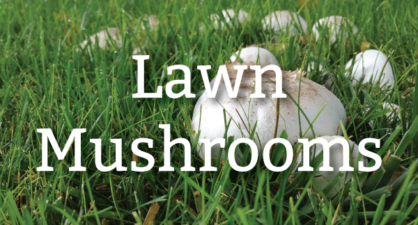 Pure-Green-blog-header_mushroom-(1).png