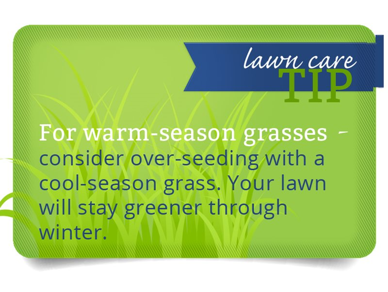 PureGreen_blueribbon-warm-season-grass.jpg